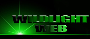 Wildlightweb